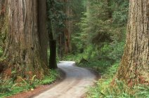 View of Forest Pathway — Stock Photo