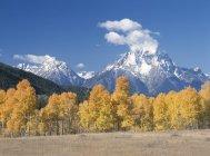 Scène d'automne avec Aspen Grove — Photo de stock