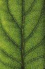 Закрыть зеленый лист — стоковое фото