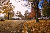 Schöne Aussicht auf den Park im Herbst — Stockfoto