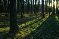 Forest Trees Casting Shadows — Stock Photo