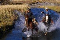 Cowboys On Galloping Horses — Stock Photo