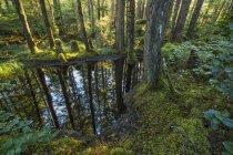 Водоемы украшают пейзаж в лесах — стоковое фото