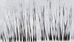 Árvores abstratas com borrão — Fotografia de Stock