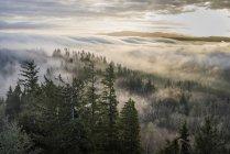 Nebel und Wald vom Coxcomb Hill aus gesehen — Stockfoto