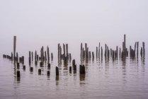 Туман затушевывает реки Колумбия — стоковое фото