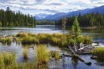 Озеро Beauvert, Национальный парк Джаспер; Джаспер, Альберта, Канада — стоковое фото