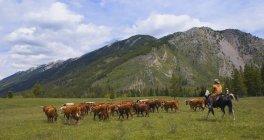 Ранчо пастуша великої рогатої худоби — стокове фото