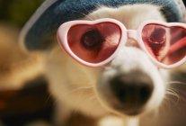 Cute Dog Wearing Shades — Stock Photo