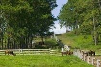 Лошади на ранчо над полем — стоковое фото