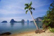 Palmeira contra água — Fotografia de Stock