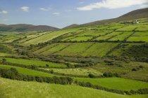 Зеленое травяное поле — стоковое фото