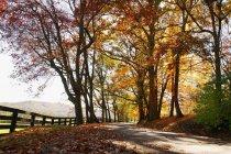 Ruta de otoño con árboles - foto de stock