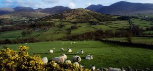 Mountains with grazing sheeps — Stock Photo