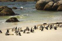 Penguins On A Beach — Stock Photo