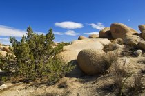 Rocky terrain with stones and tress — Stock Photo