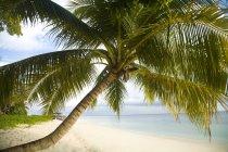 Тропический песок пляж — стоковое фото