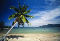 Palm Tree And Tropical Beach — Stock Photo