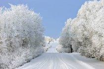 Проселочной дороге зимой — стоковое фото
