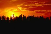 Захід сонця над ліс — стокове фото