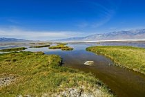 Wetland In Lake Bed Of Owens Lake — Stock Photo