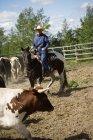 Людина в капелюх на коні — стокове фото