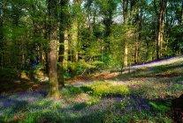 Вудс в весна денний час — стокове фото