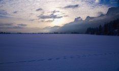 Tracks Across Snowy Ground — Stock Photo