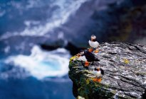 Puffins on rock of cliff — Stock Photo