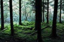Лес в горах с журналами — стоковое фото