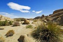 Parque Nacional Joshua tree - foto de stock