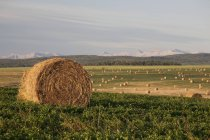 Hay Bales In A Field With Mountains — Stock Photo