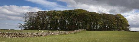 Mur de pierre menant aux arbres — Photo de stock