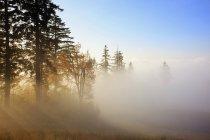 Happy Valley, штат Орегон — стоковое фото