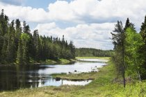 Estanque rodeado de bosque - foto de stock