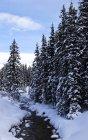 Foresta nella neve, Lago Louise — Foto stock