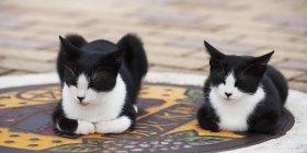 Zwei Katzen sitzend — Stockfoto