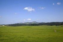 Étirement des champs verts — Photo de stock