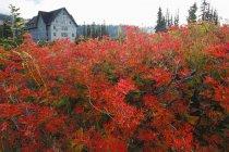 Colores de otoño en Mt. Rainier Parque Nacional - foto de stock