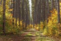 Weg in den Wald im Herbst — Stockfoto