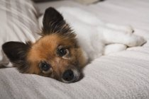 Nashville, Tennessee, United States Of America; A Dog Laying On — Stock Photo