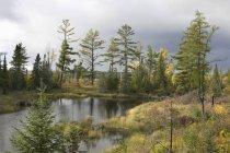 Árboles alrededor de estanques en otoño - foto de stock