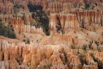 Скалы и растений через скалы — стоковое фото