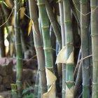 Tallos de plantas que crecen cerca uno del otro - foto de stock