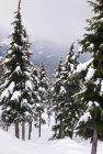Деревья в снегу — стоковое фото