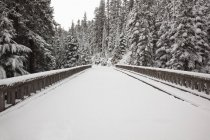 Neve fresca ao longo da estrada — Fotografia de Stock