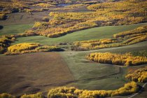 Rolling Hills With Golden Trees — Stock Photo