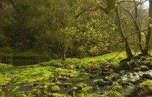 Cressbrook, Derbyshire, England — Stock Photo