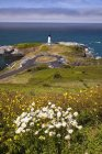 Wildflowers And Yaquina Head Lighthouse — Stock Photo