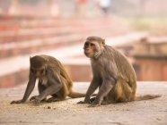 Мавп, сидячи на землю — стокове фото